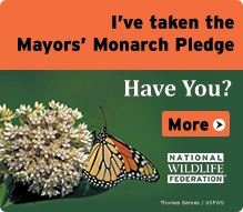 Mayor's Monarch Pledge
